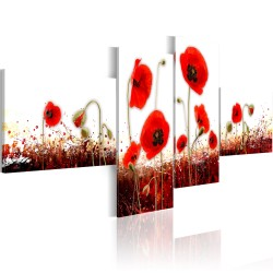 Kép  A field of poppies on a white background